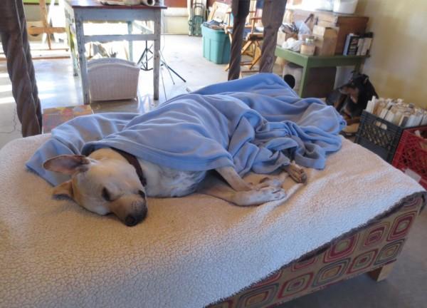 Rescue Dog: Meet Finn (Survivor) IMG 2778 600x432