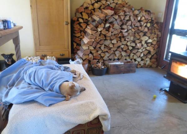 Rescue Dog: Meet Finn (Survivor) IMG 2780 600x433